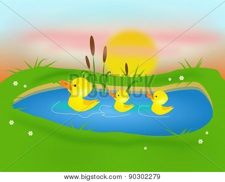 Three Ducklings On Pond