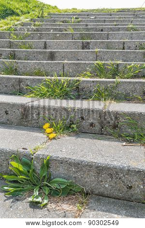 Concrete Stairway With Different Types Of Weeds On The Stairs
