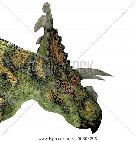 Albertaceratops Dinosaur Head