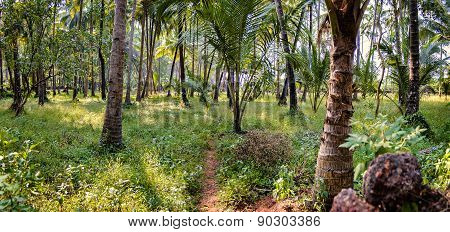 Tropical Trees And Bushes And A Narrow Path Through It, India