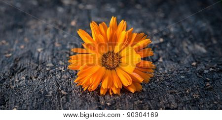 Cute flower on harsh plank