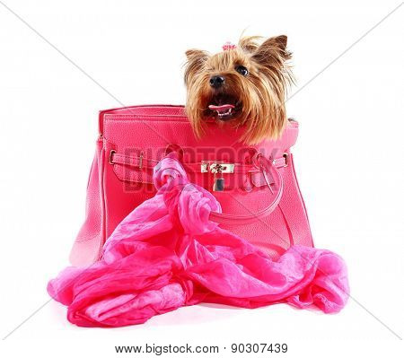Cute Yorkshire terrier in pink bag isolated on white