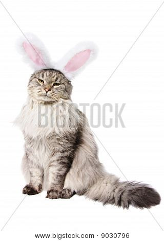 Cat In A Suit Of A Rabbit