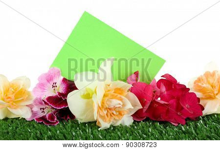 Beautiful bright flowers with card on green grass isolated on white