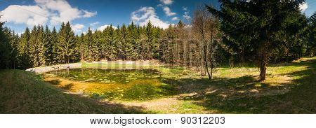 Panorama Of Small Pond In The Woods
