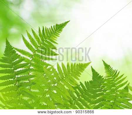 Fern leaf on green natural background