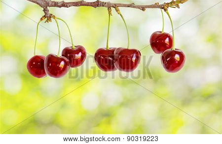Berries Cherries On A Branch On Abstract Background