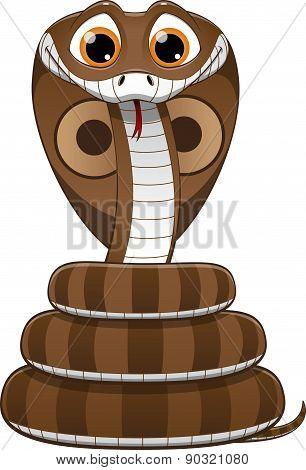 cute baby cobra