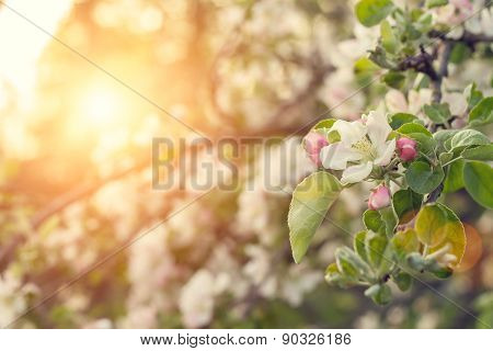 Beauty Spring Nature Background.