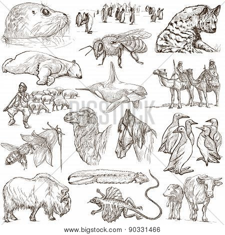 Animals - Freehand Sketches On White