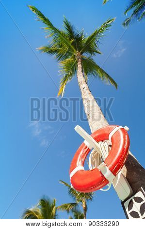 Red Round Life Buoy Hanging On The Tall Palm Tree