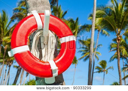 Red Life Buoy Hanging On Palm Tree