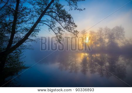 Morning fog on a forest river