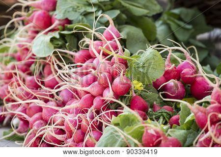 Fresh Organic Baby Radish At Farmer's Market