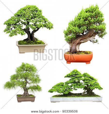 Collection of bonsai. Isolated on white background