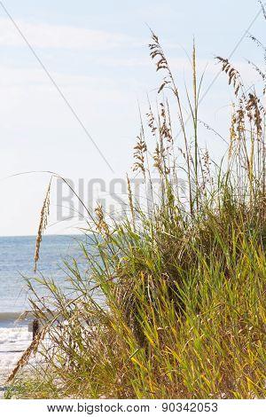 Myrtle Beach Sea Oats