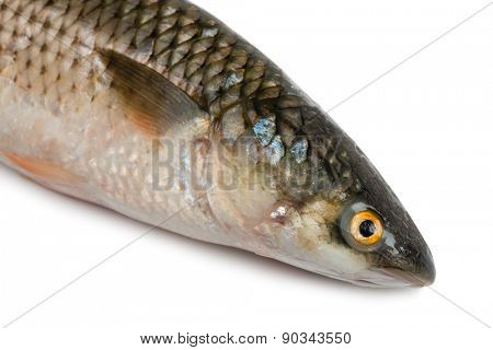 Front part of the body sea fish Mullet or Haarder, isolated on white