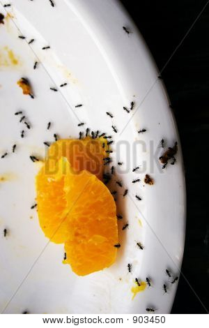 Ants 02