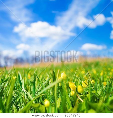Spring meadow on bright sunny day