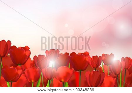 Red Tulips On Shiny Background