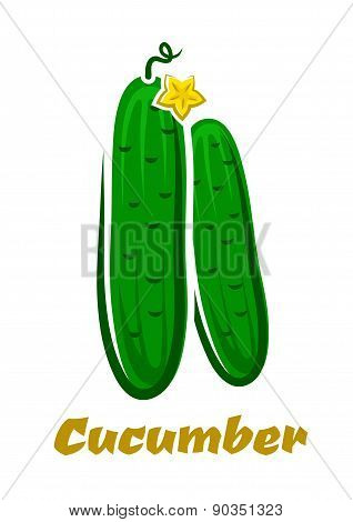 Fresh green farm cucumbers vegetables