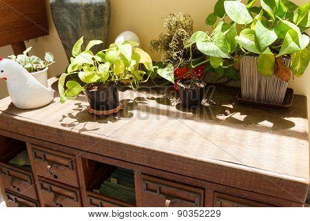 Plant On Old Wooden Desk Drawer