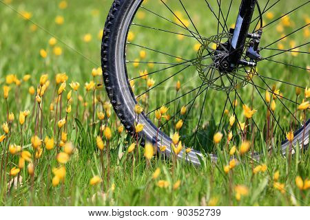 Bike wheel on green flower meadow