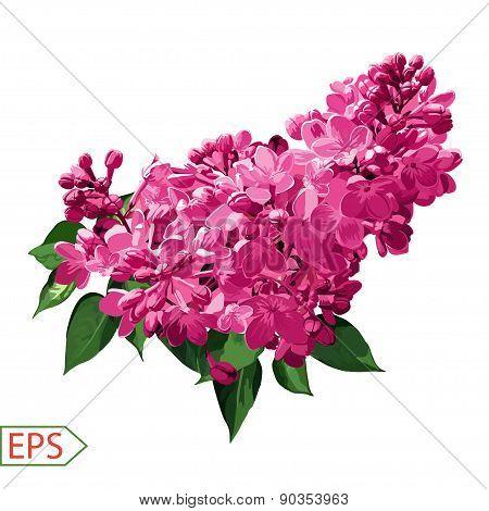 Spring izolate lilac flower for the design. Vector illustration