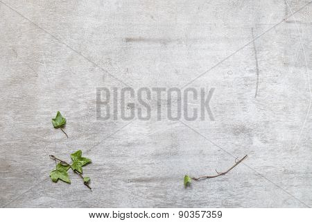 Green Ivy Plant Hedera Helix Close Up In Rustic Wooden Surface Background Copy Space  For Your Text