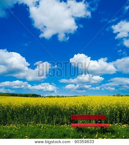 red bench in front of blooming canola field