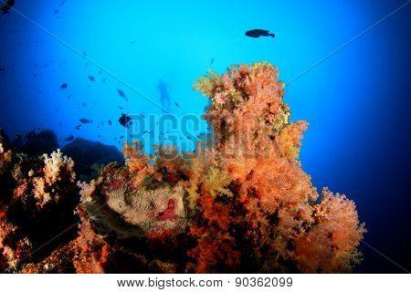 Coral reef scuba diver