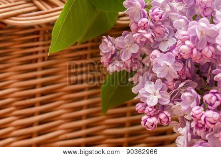 Lilac Flowers In The Basket