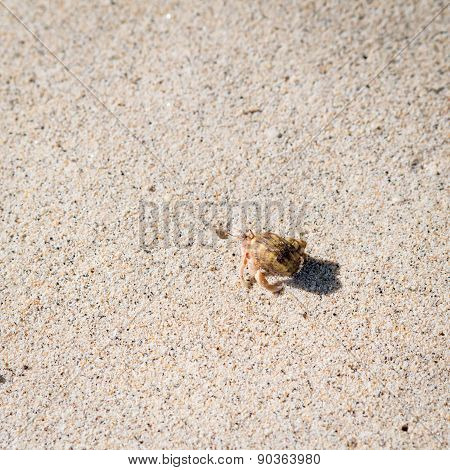 Hermit Crab In Sand