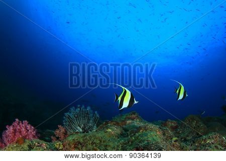 Tropical fish on coral reef underwater in ocean