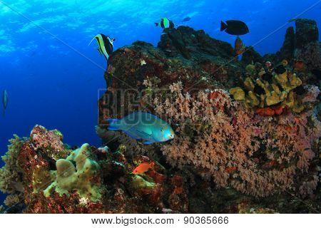 Coral reef underwater and parrotfish
