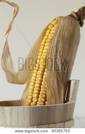 Ear of corn