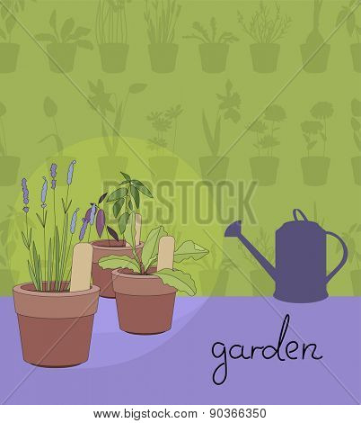 Flower pots with herbs and vegetables.