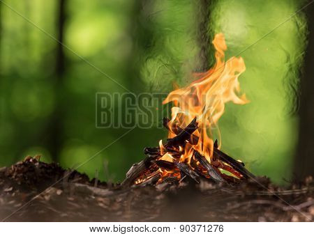 Bonfire in spring forest, close-up.