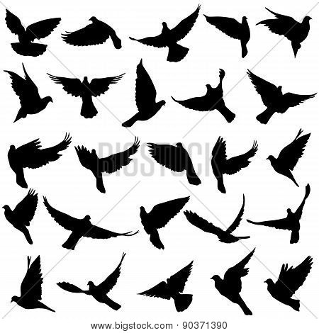 Concept Of Love Or Peace. Set Of Silhouettes Of Doves. Vector Il