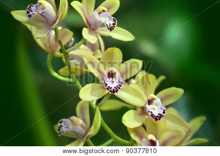 Yellow Orchid On Green