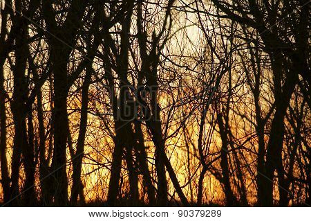 Inflamed trees