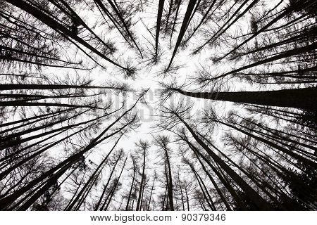 Forest View From Below