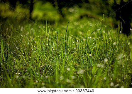 Bright Green Grass On Background With Beautiful Bokeh