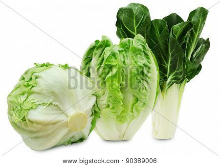 Set of three varieties of fresh lettuce isolated on a white background