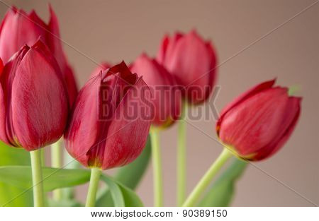 Beautiful bunch of red tulips