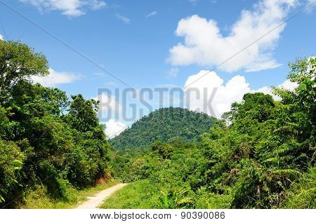 Tropical Jungle On An Island Borneo In Indonesia