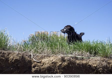 Small Black Dog Standing in Tall Grass