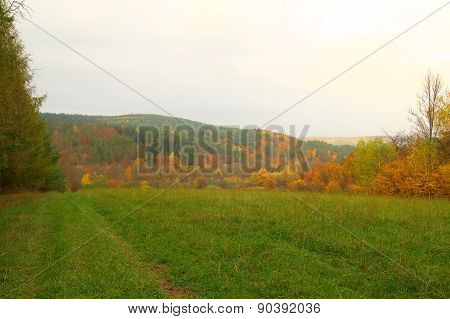 Beauty Autumn Forest With Meadow