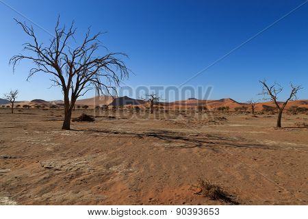 Death Tree Hidden Vlei