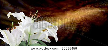 White Lilies and Golden Light